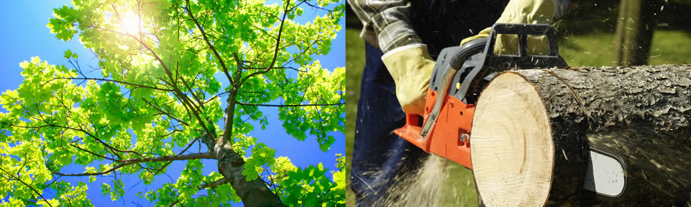 Tree Services East Carondelet